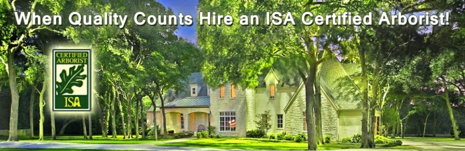 hire a certified arborist in the Houston area
