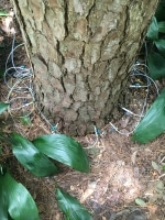 pine bark beetle treatment in The Woodlands TX