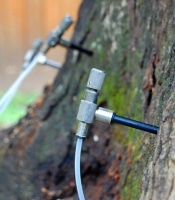 feeding trees