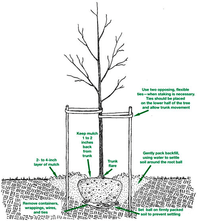 tree planting info graphic