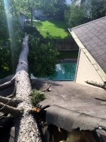 tree removal in Spring TX