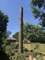 tree removal in The Woodlands TX