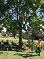 trimming a tree in The Woodlands TX