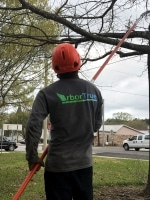 tree trimming in Houston TX
