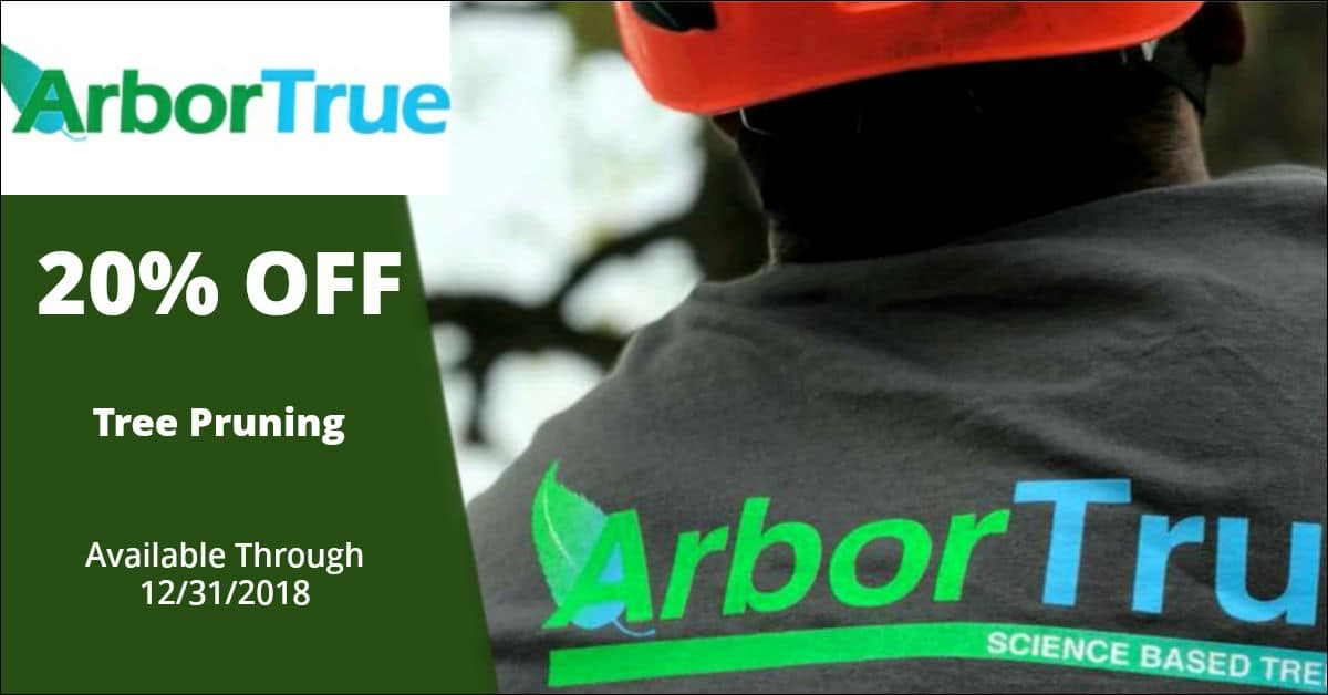 20% off tree pruning
