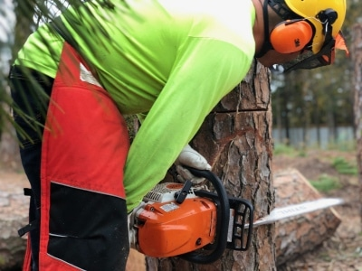 tree-service-skills-training -in-action-houston-tx