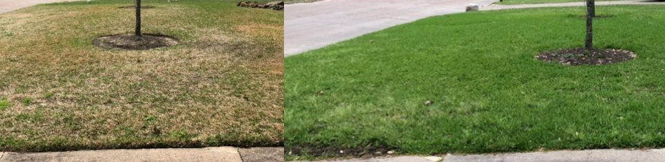 winter fertilizing before and after