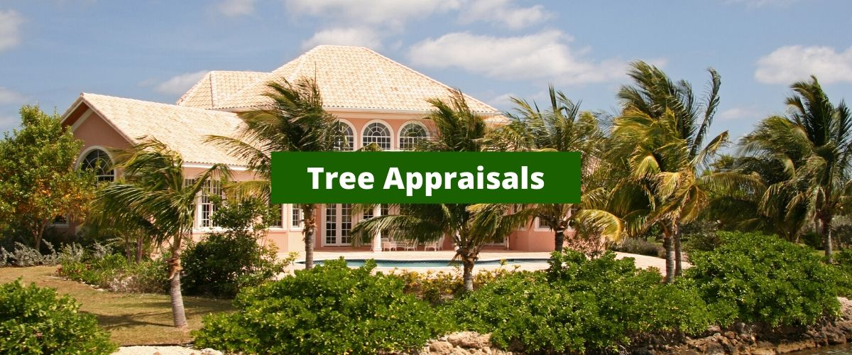 Tree Appraisals in houston tx