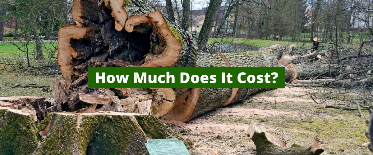 how-much-does-tree-service-cost
