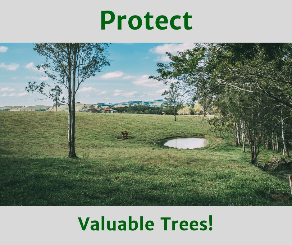 protect-valuable-trees