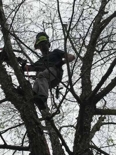 best-tree-trimmers-in-houston-tx