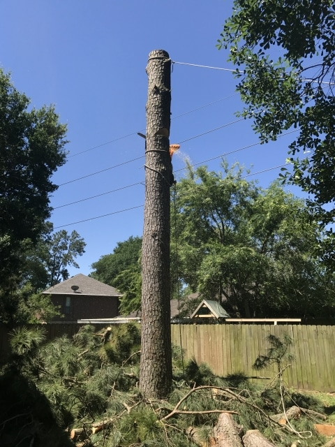 tree-removal-in-action-houston-tx