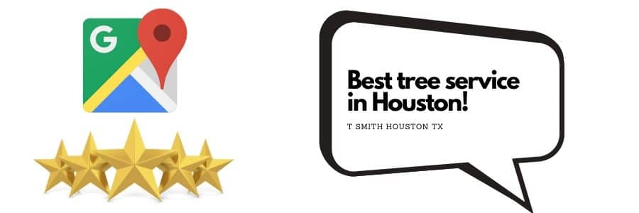 best tree service in houston!