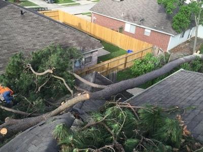 Katy-Arborist.com 24 hour Emergency fallen tree removal (1)